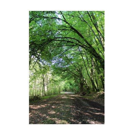 Adhésif pour porte - Chemin en forêt