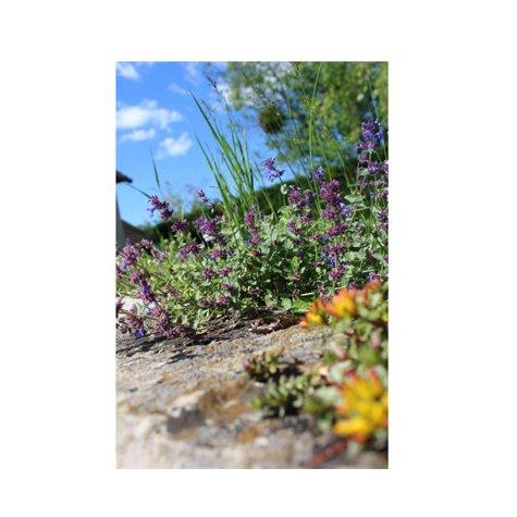 Adhésif pour porte - Fleurs violette